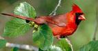 Mystery Bird hint